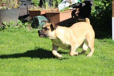 Bailey on gaurd duty