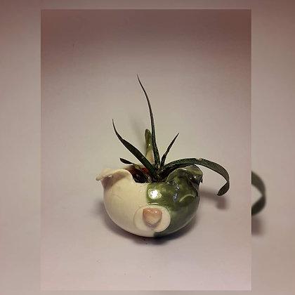 Macetas chicas de cerámica - Miki diseño y cerámica