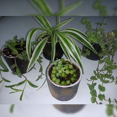 Macetitas artesanales con cactus y suculentas - El pinchudito cariñoso