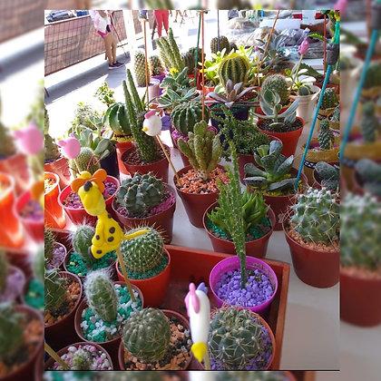 Cactus 1 - Kokedamas y Cactus