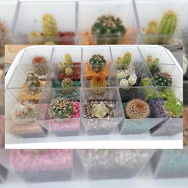 Mini Terrarios - Un Arte regalar