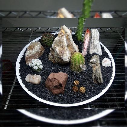 Mini Jardines - Un Arte regalar