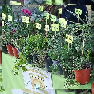 Variedad de aromáticas - Opuntia