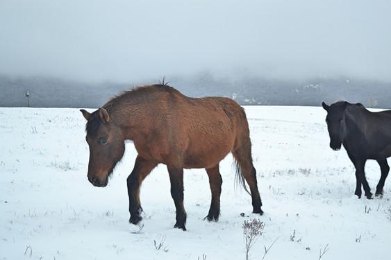 Hucul lovak télen