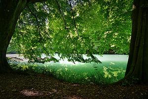 Tengerszem-tó Kert| Zuzmó Vendégház Jósvafő | Szállás Aggeleki Nemzeti Park