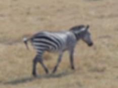 Kenya Safari photos 168.JPG