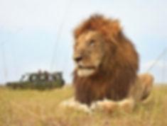 lions-03.jpg