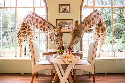 Giraffe Center Visit