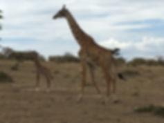 Kenya safari 439.JPG