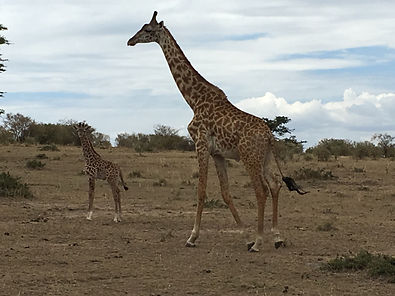 Kenya safari 439.JPG