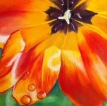 Charlene Wright orange flower.jpg