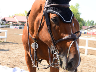 What is the most important quality in a horse?