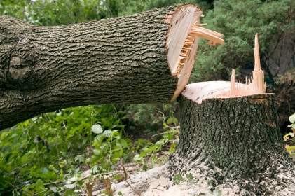 Kritische vragen over Bomenkap