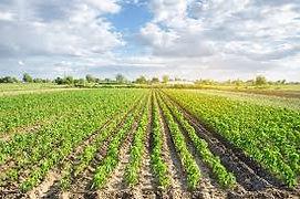 Duurzame Landbouw.jpg