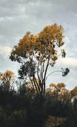 Restore Australia