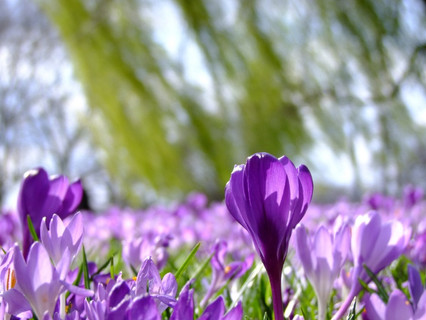 8 Марта - с праздником Весны!