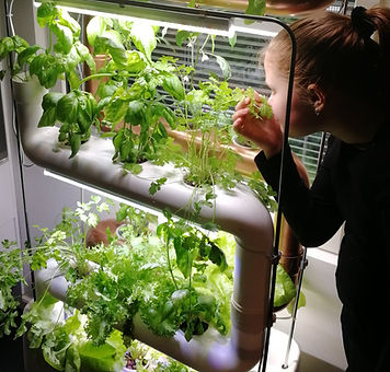 vertical-farm-growing-food.jpg