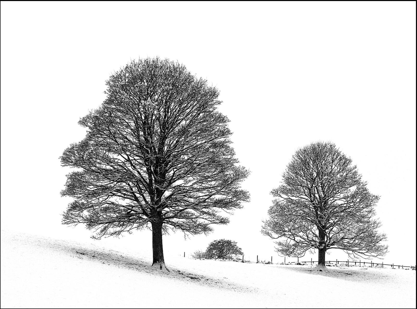 Midwinter Trees