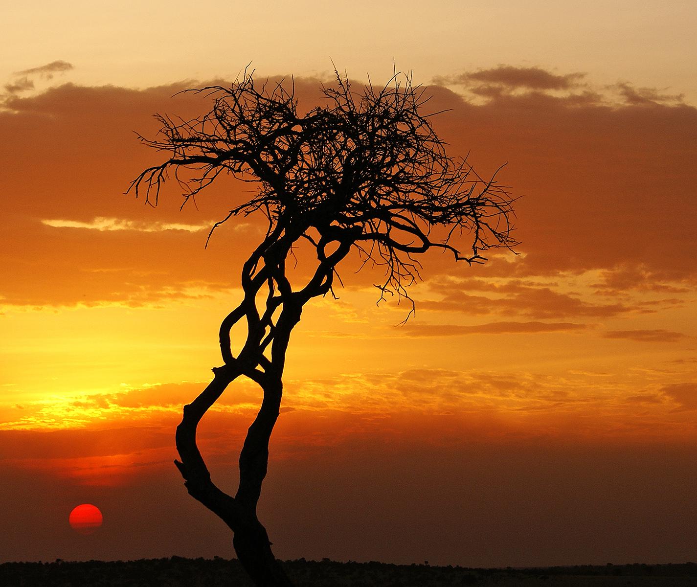 Lone Tree at Sunset