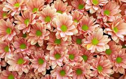 Bloomin' Marvellous 3rd Digitals
