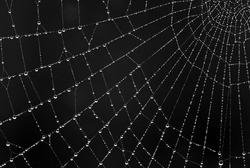 The Web 2nd - Digitals