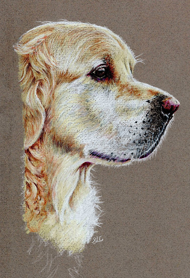 Greeting Card-Golden Retriever