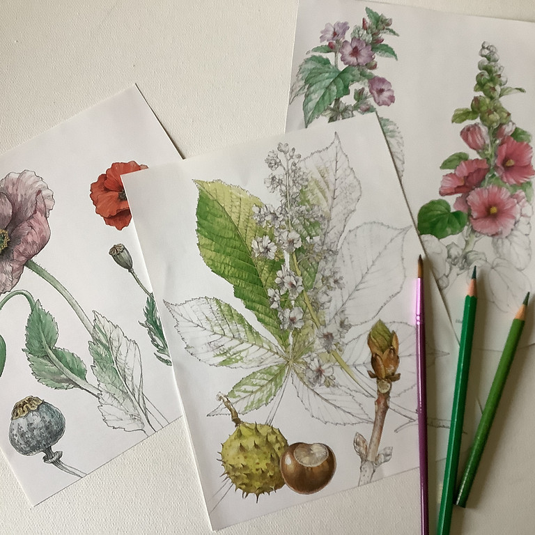 Botanical Art with Watercolour Pencils