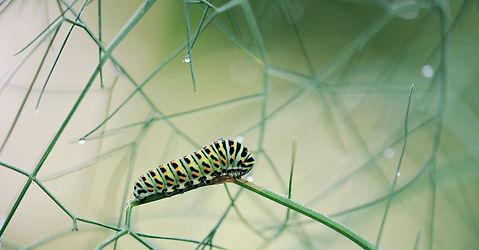 caterpillar-5113614_1920.jpg