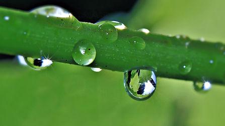 Makroaufnahme Grashalm mit Wassertropfen