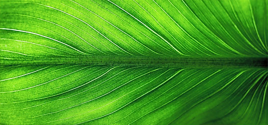 leaf-2210973_1920_edited.jpg