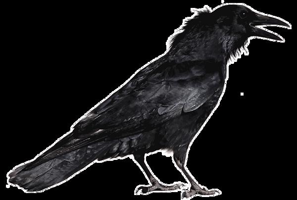 crow-op.png