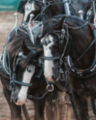 Pastel Painting of Horses