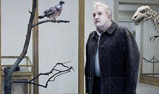 un-piccione-seduto-riflette-sull-esisten