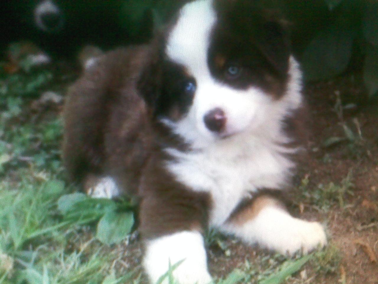 Bond as a puppy