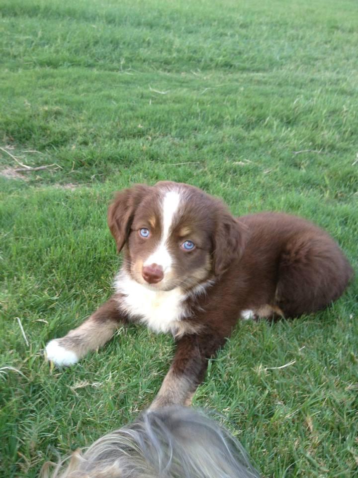 Roxy as a Puppy