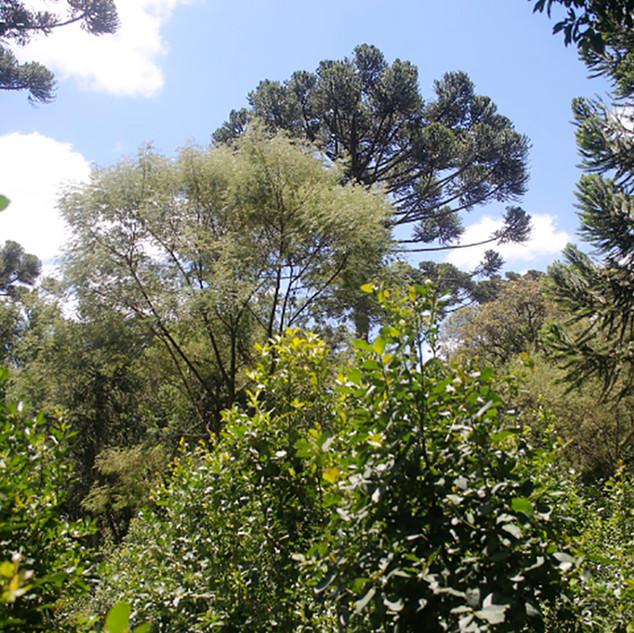 O erval manejado por Elpídio e Sylvana concentra uma importante biodiversidade em meio a um grande mosaico de monoculturas na região de São Mateus do Sul, Paraná.