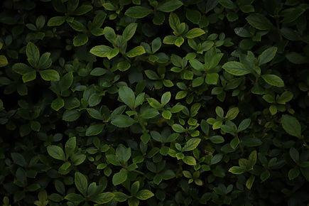 pexels-lebele-mass-5643880.jpg