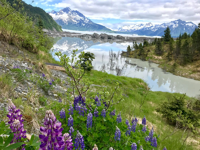 Lupines and Glacier.JPEG