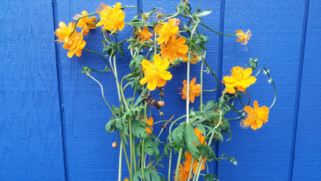 flowers on blue wall