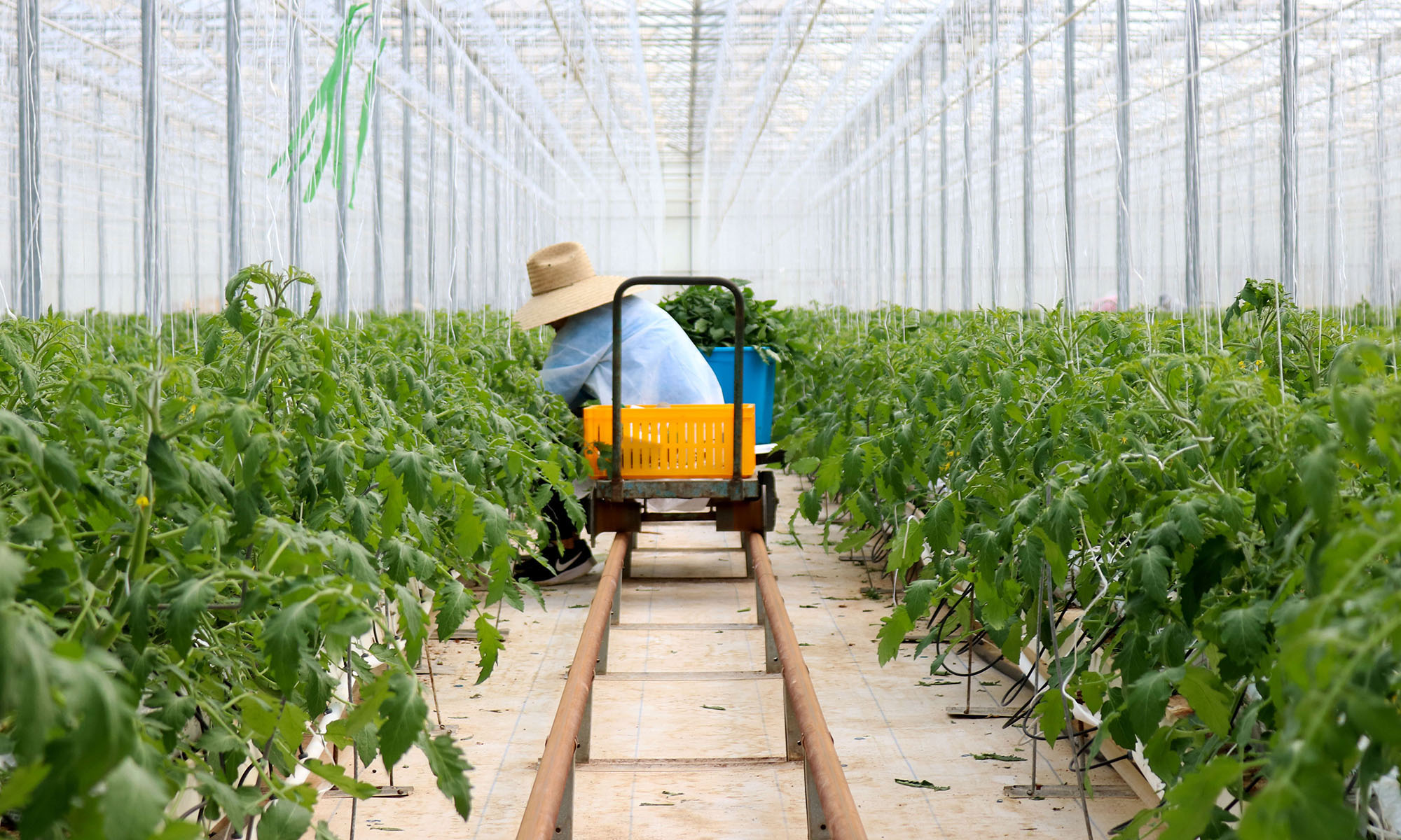 NatureSweet Farmworker