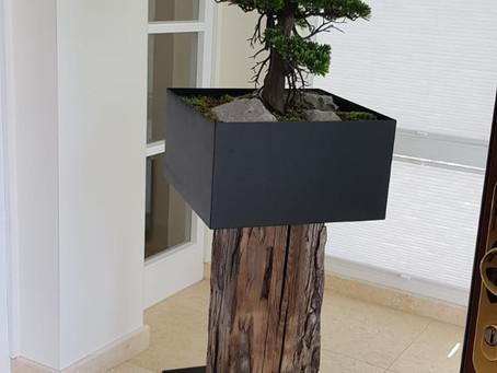 Pflanzen Säulen