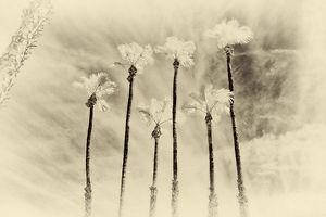 Palm01.jpg