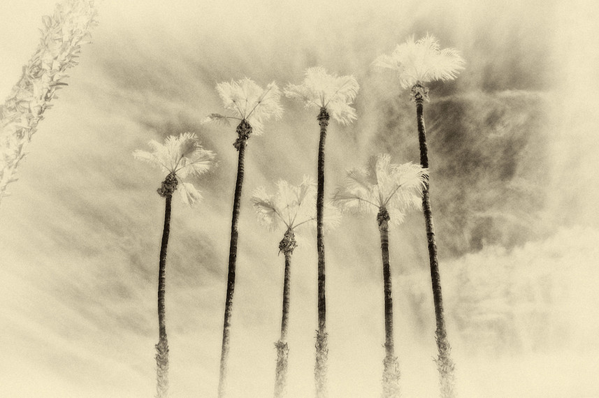 Palm Study 01