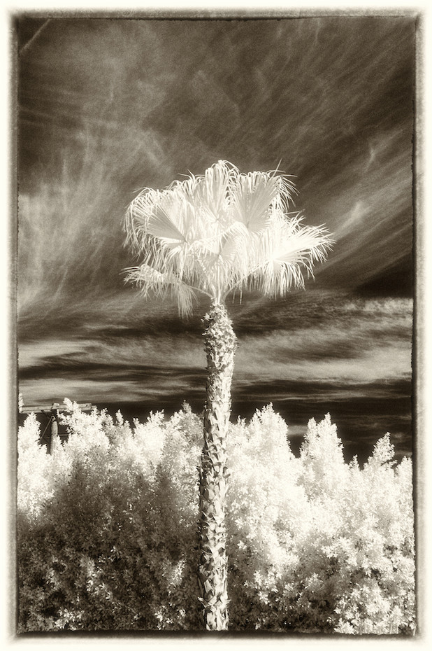 Palm Study 03