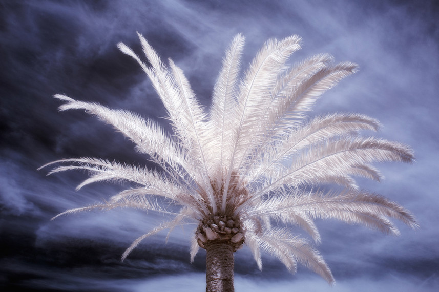 Palm Study 11