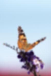 MLW_4012.jpg