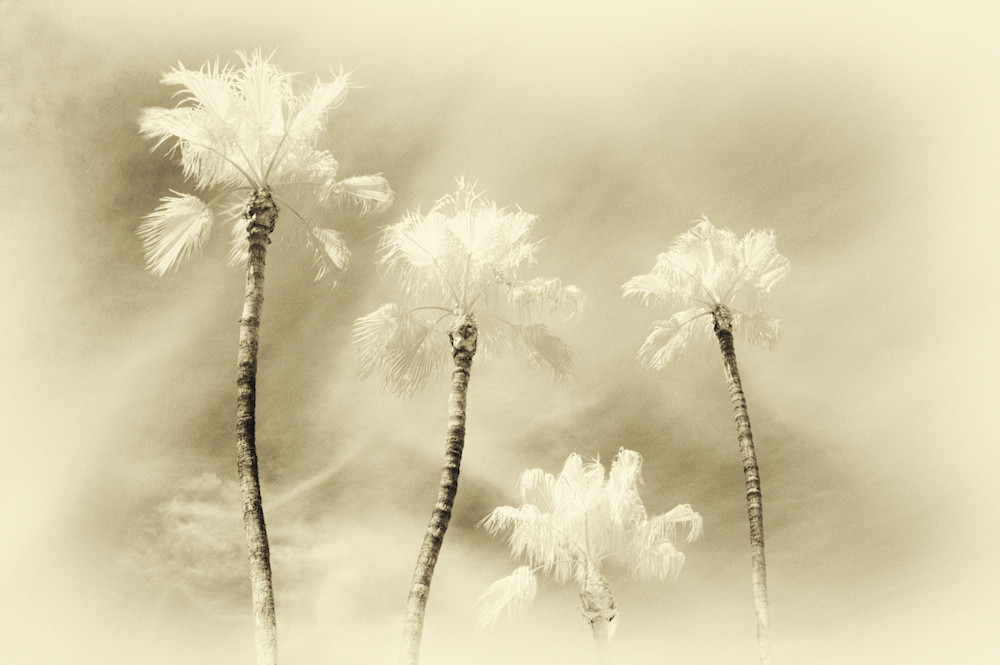 Palm Study 02