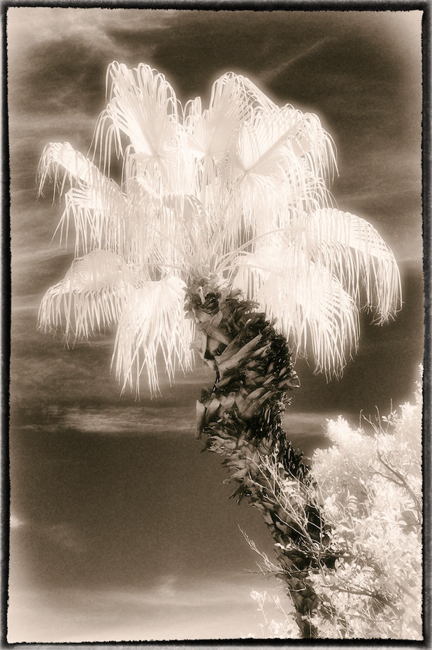 Palm Study 04