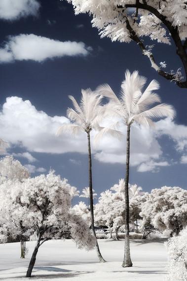Palm Study 09