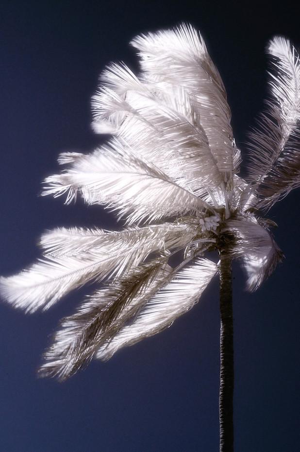 Palm Study 10
